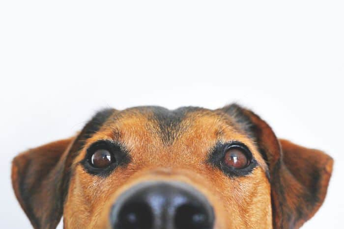 What Happens to Our Pets in a Divorce?